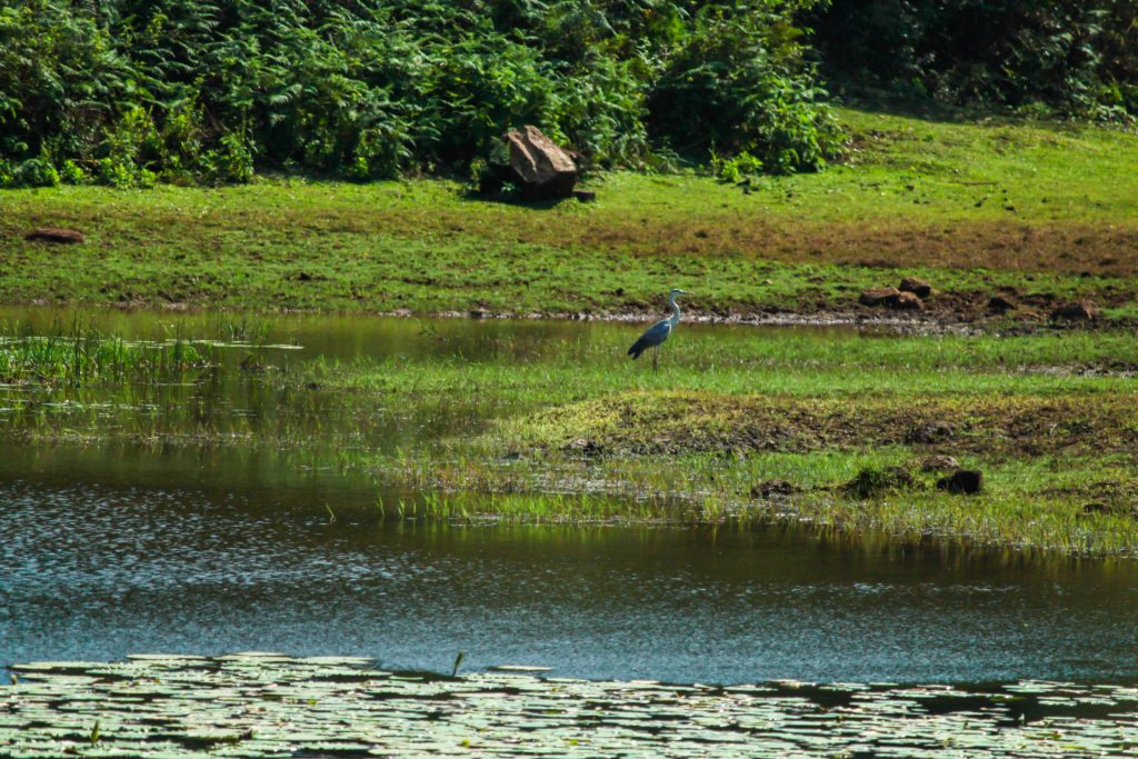 A-Bird-Sitting-Near-Lake-in-Sakleshpur