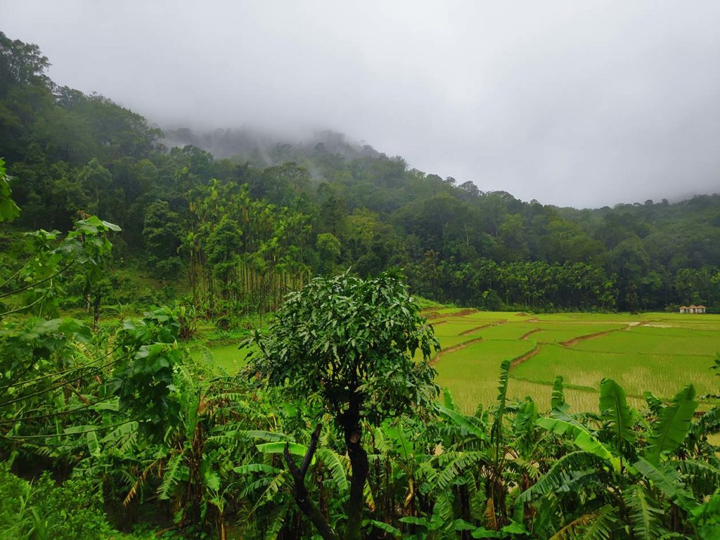 A view of shola forest as seen on Kodachadri Trek