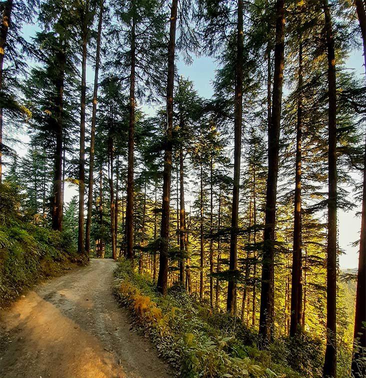 Kodia Forest, Kanatal Uttarakhand