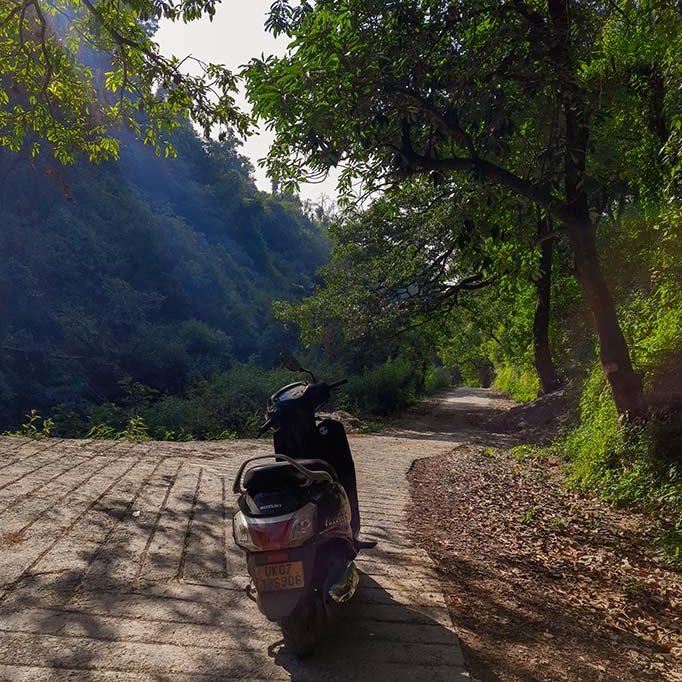 Trail going through a jungle